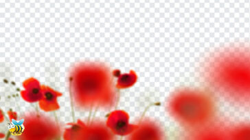 Poppy Flowers PNG
